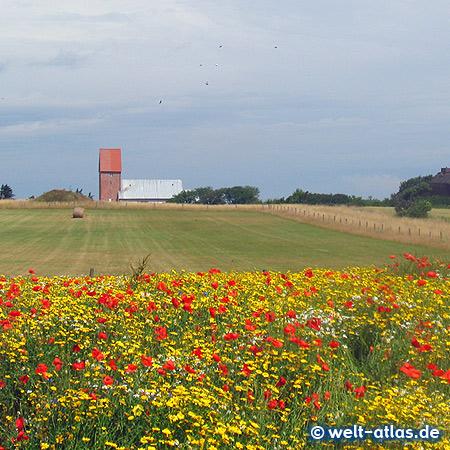 Sommertag in Keitum auf der Insel Sylt, im Hintergrund die Kirche St. Severin