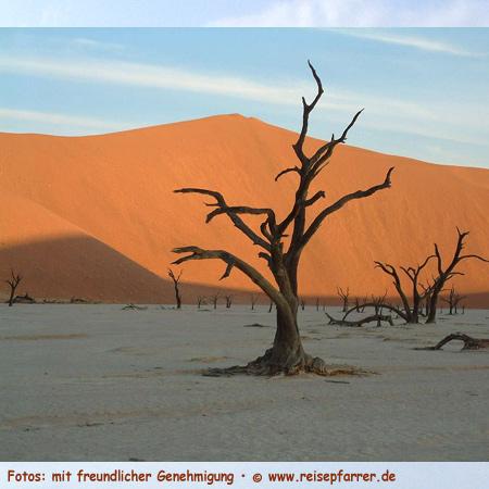 Die Dünen von Sossusvlei gehören zu den höchsten Dünen der Welt, Höhe bis ca. 300m. Foto:© www.reisepfarrer.de