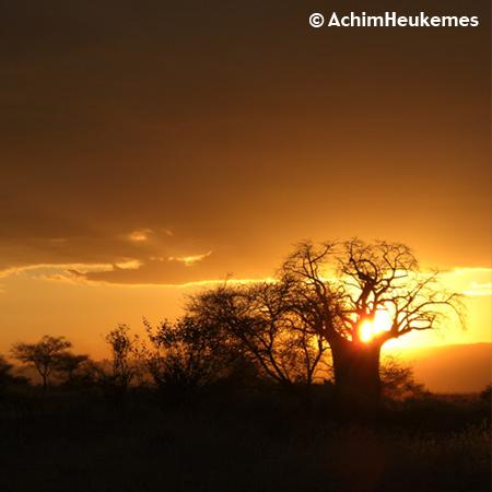 Sunset, Tanzania, Baobab Tree, picture taken by Achim Heukemes, a German Ultra Runner
