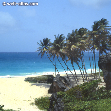 Bottom Bay, Barbados - beach with tall palm trees and white sand