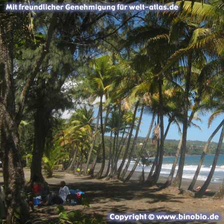 Palmenstrand an der Grande Anse auf Basse Terre, Guadeloupe Fotos: Reisebericht Guadeloupe, guadeloupe.binobio.de