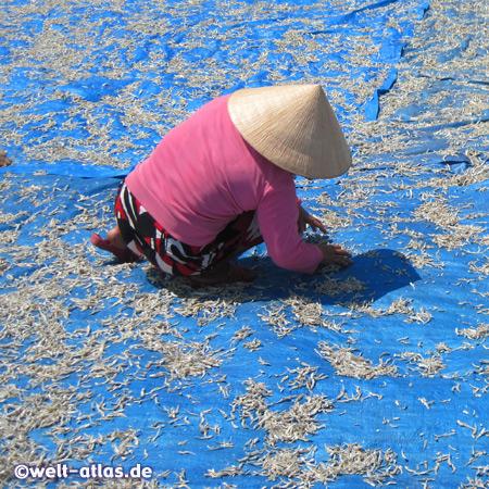 Auf Matten wird Fisch in der Sonne getrocknet, er ist Bestandteil der berühmten Phu Quoc Fish Sauce