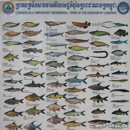 Poster in einem Schwimmenden Dorf - Fische im Tonle Sap, Kambodscha