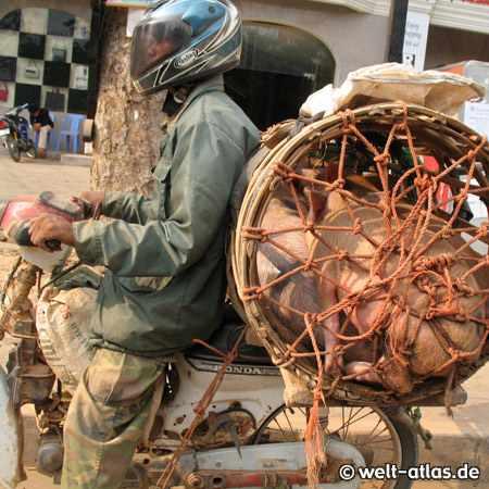 """Schweinetransport"" auf dem Motorroller, Siem Reap, Kambodscha"