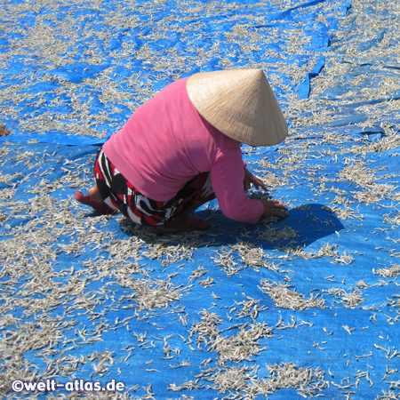 Dried fish production, Phu Quoc Island, Vietnam