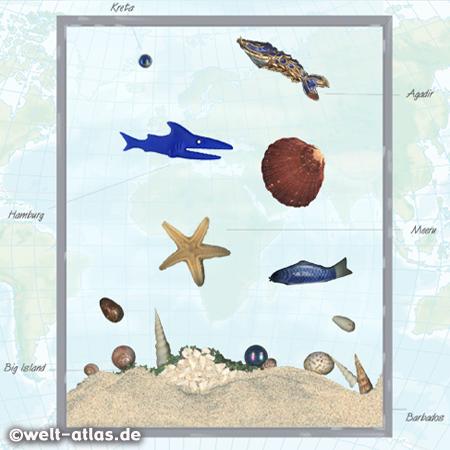gerahmtes Bild mit Sandproben, Muscheln, Seestern u. Fundstücken vom Strand aus Hamburg, Hawaii, Agadir, Kreta, Barbados, Malediven, Neuseeland