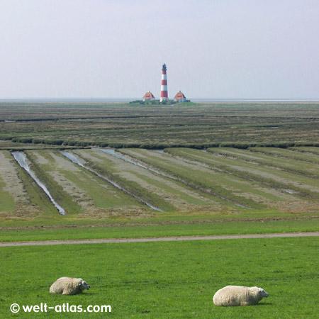 Westerhever Leuchtturm mit Schafen am Deich