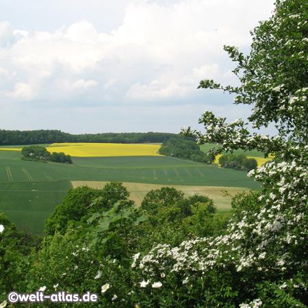 Rapeseed field near Osterburken Baden-Württemberg, Germany