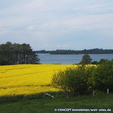 beautiful rapeseed field at Dobersdorfer See near Schlesen