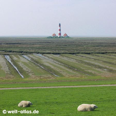 Westerhever Leuchtturm und Schafe am DeichPosition: 54° 22,5′ N / 08° 38,5′ E