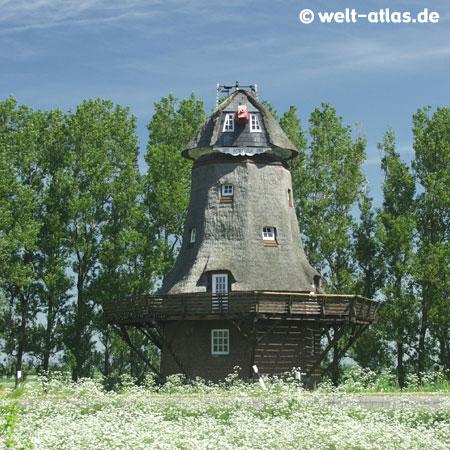 Mill Fortuna