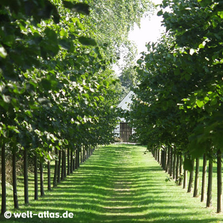 Hochdorfer Garten mit Haubarg,bedeutendes  Gartendenkmal
