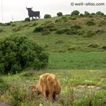 """Saftige Wiesen, Kühe und  """"El Toro de Osborne"""""""