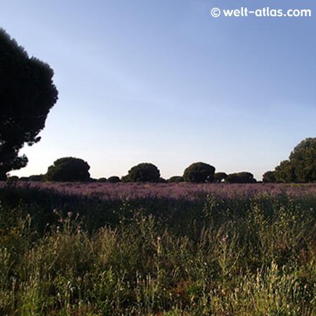 Landschaft bei Chiclana, Novo Sancti Petri