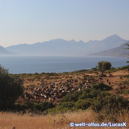 Sea, hills and countryside with flock of sheep in Astakós