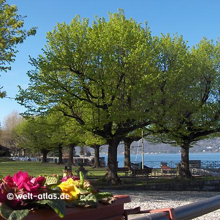 Cerro, Seeufer, Blumen, Laveno-Mombello