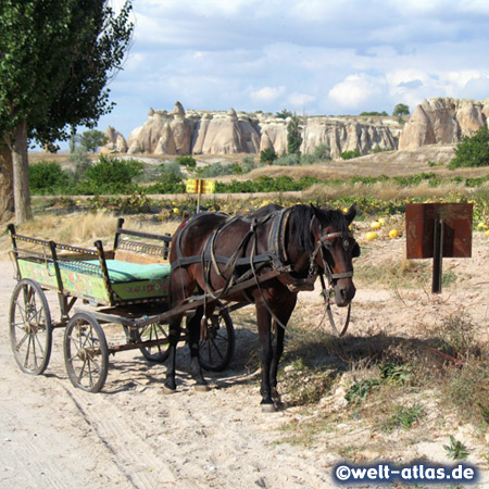 Horse cart in Cappadocia, waiting for tired hikers