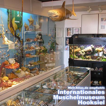 Weltweit einzigartig! Das Modell einer 7 Meter breiten Riffkante mit echten Steinkorallen! Das Museum finden Sie in der Lange Straße 17, 26434 Hooksiel
