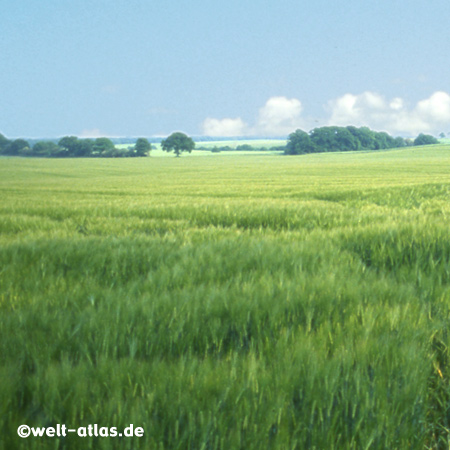 Summer in the fields near the Baltic Sea