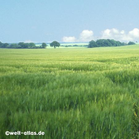 Sommertag über den Feldern, Friederikenhof, Wangels, Ostholstein, Nähe Weißenhäuser Strand, Ostsee