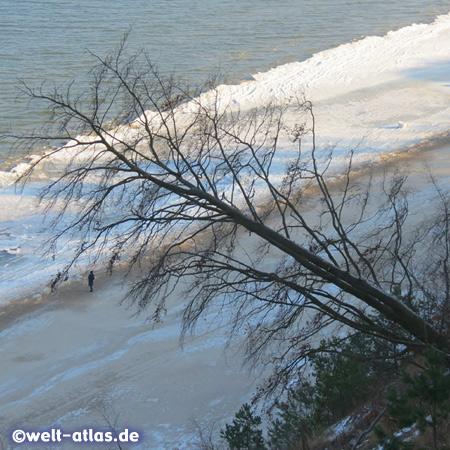 Blick von der Kliffkante am Langen Berg (ca. 54 m) auf die winterliche Ostsee, die Steilküste befindet sich in ständigem Wandel, zu sehen an den abrutschenden Bäumen und Findlingen