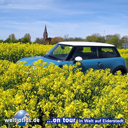Welt-atlas on tour in Welt auf Eiderstedt,mit blauem Mini im Raps