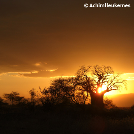 Extremsportler Achim Heukemes  unterwegs, hier ein Baobab in Tansania bei Sonnenuntergang www.heukemes.net