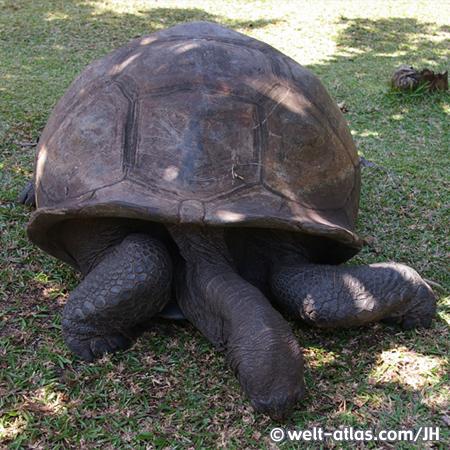 Schildkröten auf Curieuse Island