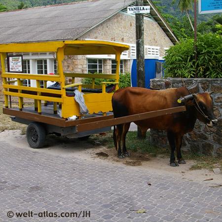 Ochsenkarren auf La Digue, Seychellen, gebräuchliches Verkehrsmittel