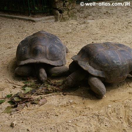 Schildkröten auf Curieuse
