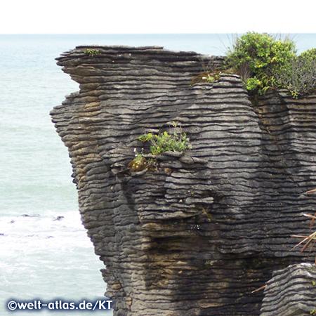 Pancake Rocks bei Punakaiki im Paparoa-Nationalpark, Felsformation aus Limestone