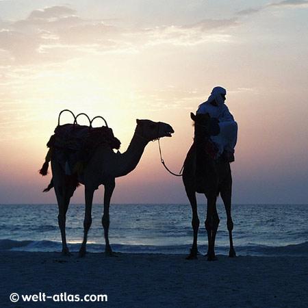 Jumeirah Beach, Abendstimmung, Kamele am Strand