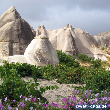 Wine and flowers, valley in Cappadocia