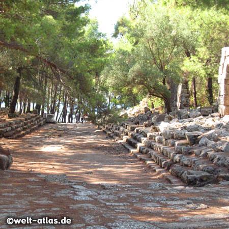in den Ruinen von Phaselis, schön gelegen in einem Kiefernwald direkt am Meer