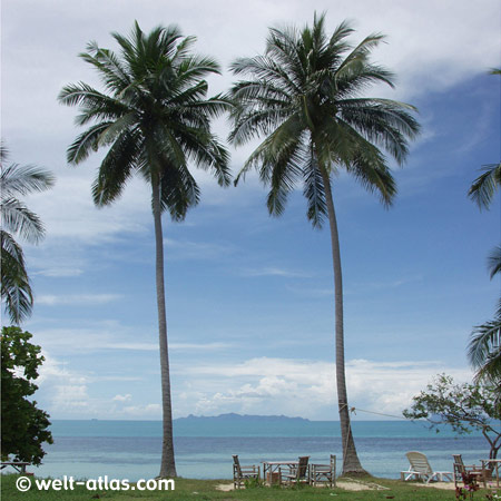 Koh Samui, Bucht von Taling Ngam, Palmen
