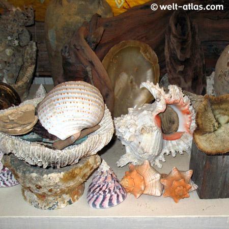 Muschel-Museum, Nathon, Koh Samui, Thailand
