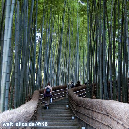 Im Bambuswald von Sagano-Arashiyama bei Kyoto