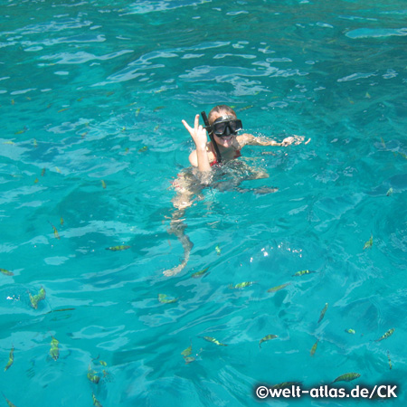 snorkeling with the fish in turquoise water, Ko Phi Phi Don