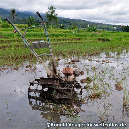 Reisfeld bei Pandai Sikek auf Sumatra