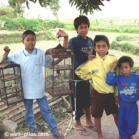 Dorfkinder mit Vogelkäfigen, Lombok, Indonesien