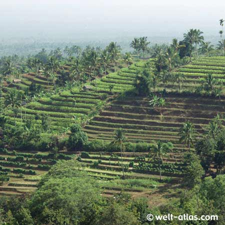 Rice terraces, Lombok, Indonesia