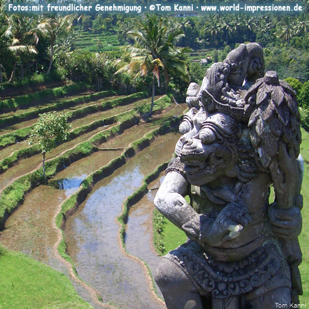 Rice terraces and temple statue, Bali