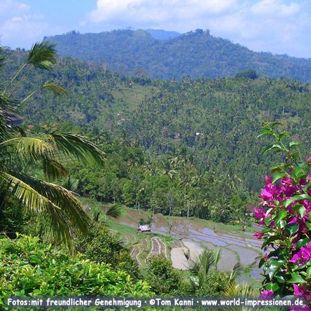 Reisterrassen in den Bergen auf Bali