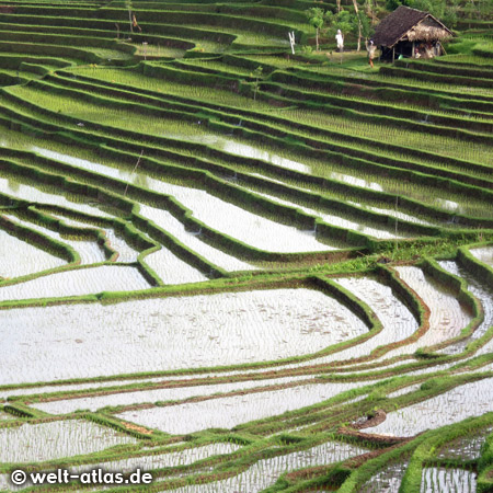 Stunning views of the beautiful rice terraces