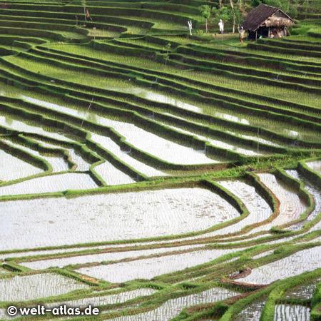 Immer wieder hat man faszinierende Ausblicke auf die schönen Reisterrassen