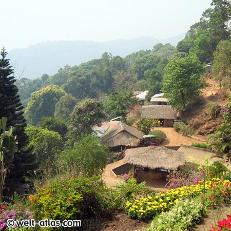Doi Pui National Park, Thailand,Provinz Chiang Mai