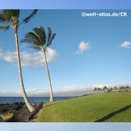 Palmen am Waikoloa Beach, Hawaii, Big Island, USA