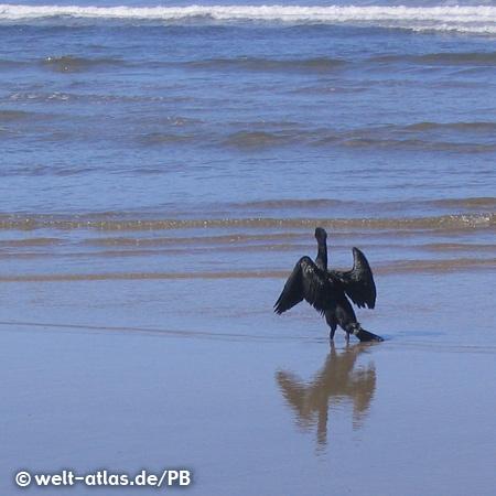 Cormorant on the Oregon Coast, Pacific Ocean