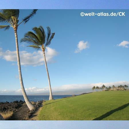 Palm trees at Waikoloa Beach, Hawaii, Big Island, USA