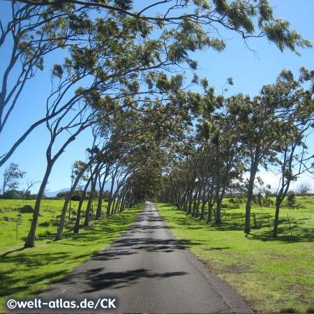 Road on Big Island, Hawaii